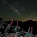 Tajinastes en el Parque Nacional de Las Cañadas del Teide y vía láctea